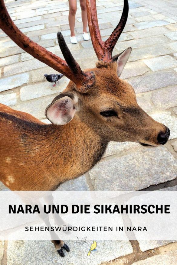 Nara, die Stadt der Sikahirsche hautnah erleben